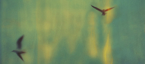 Seagulls (@) Fernanda Montoro